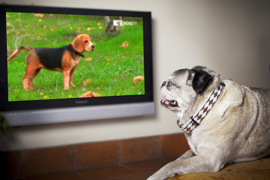 Sling TV Launches Comedy Dynamics, DOGTV Channels