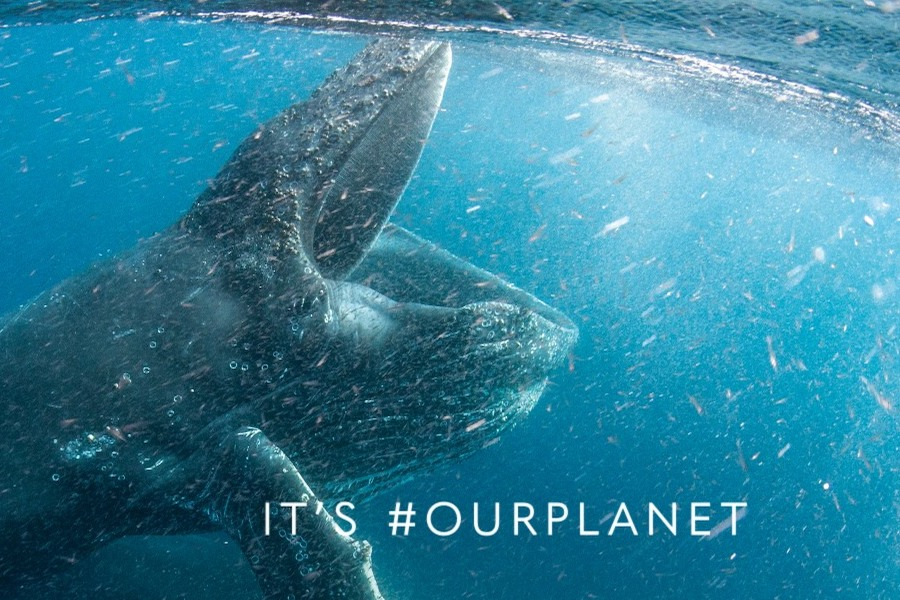 Netflix to Bow 'Our Planet' Documentary Series Narrated by Sir David Attenborough April 5