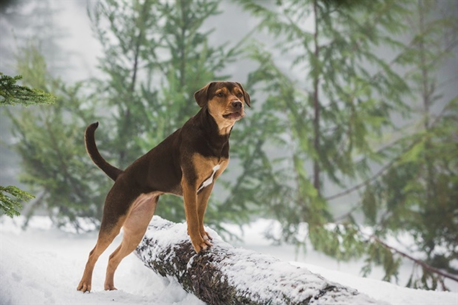 'A Dog's Way Home' Travels to Digital March 26, Disc April 9 From Sony Pictures Home Entertainment
