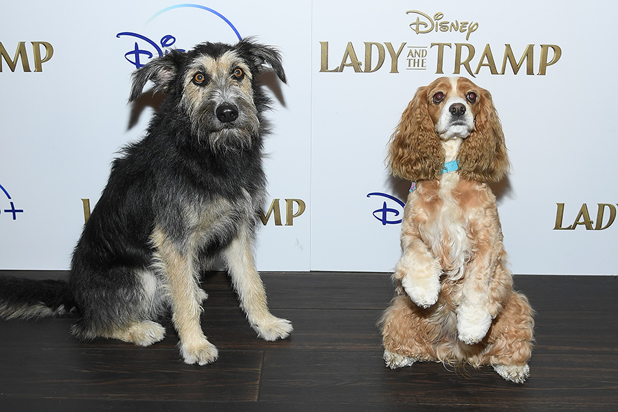 'Lady and the Tramp' Screening