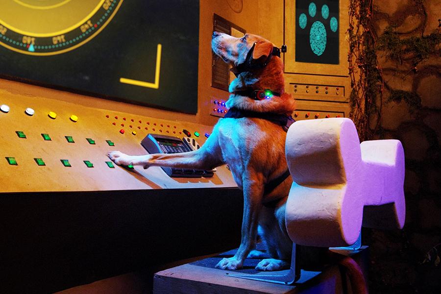 Lionsgate Releasing Family Adventure 'Agent Toby Barks' April 14