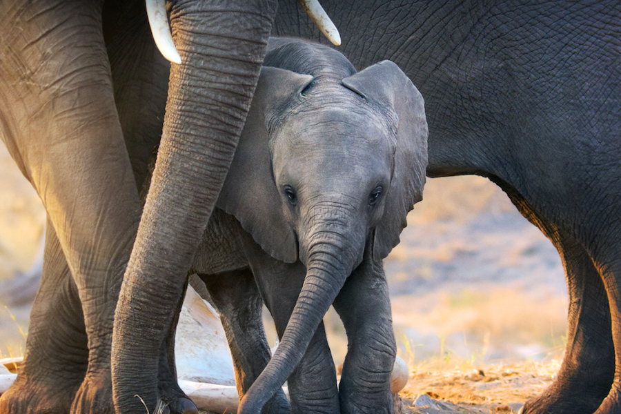 Disney+ to Stream 'Elephant' Nature Film Narrated by Meghan Markle for Earth Month