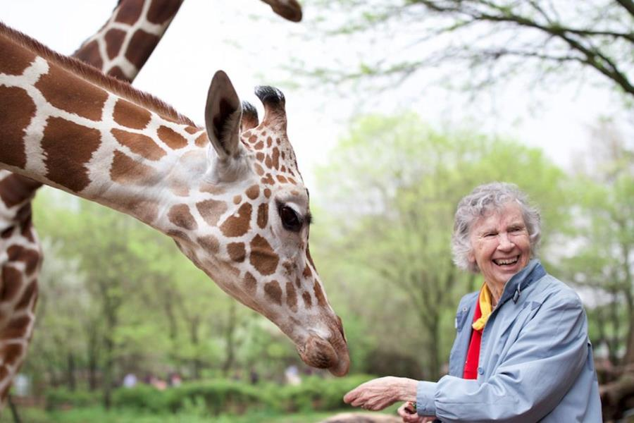 Kino Lorber Sets Home Release Date for 'The Woman Who Loves Giraffes'