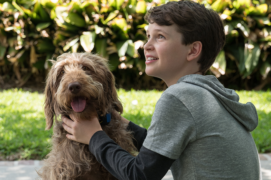 Lionsgate's 'Think Like a Dog' Due on Disc and Digital June 9