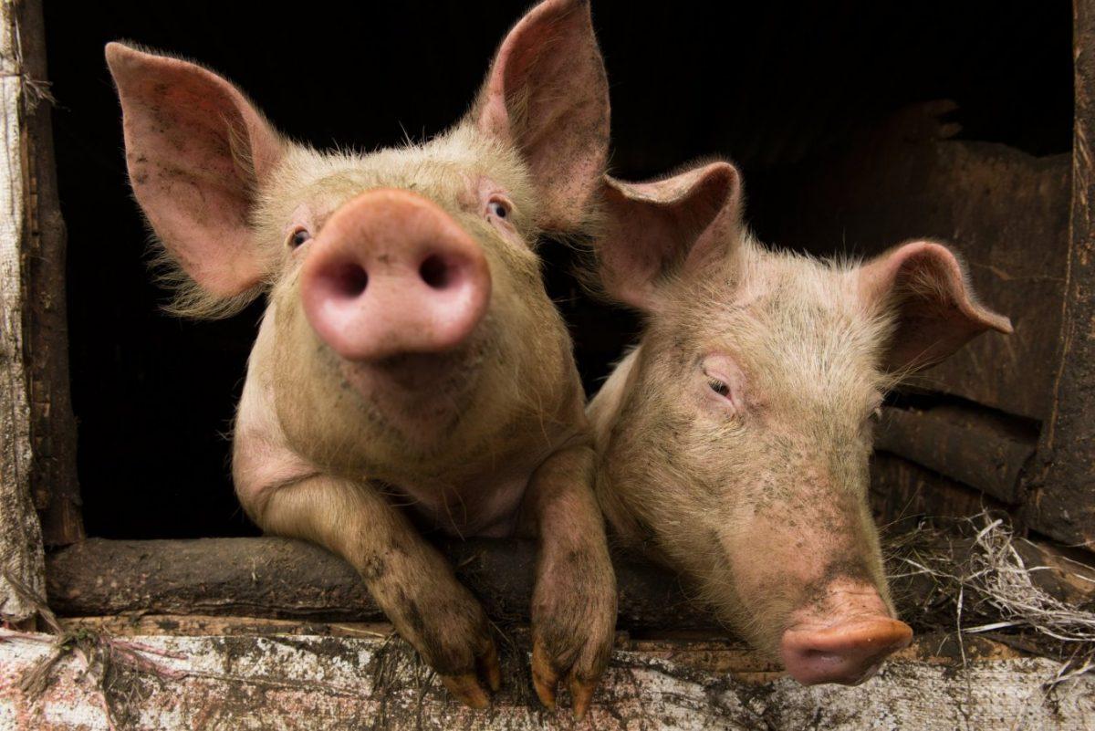 DirecTV Stream: Lipstick on Pay-TV Pig